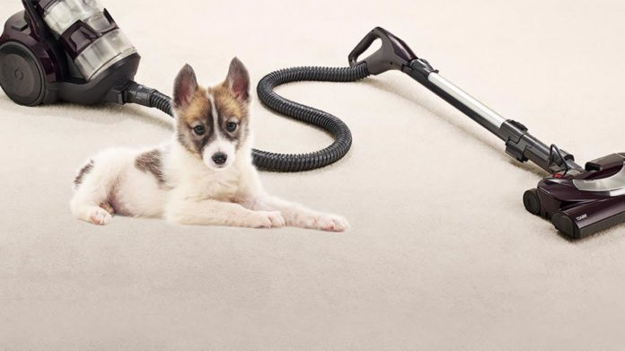best vacuum for pet hair carpet